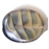 Glass Bead Twist Oval 16x13mm Shell-Beige Stripe Strung